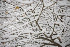 Bloße gefrorene Niederlassungen umfasst mit frischem Schnee Stockfotos