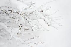 Bloße gefrorene Niederlassungen umfasst mit frischem Schnee Russland, UralJanuary, Temperatur -33C Stockfotos