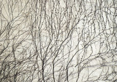 Bloße Kriechpflanzenanlage auf der Steinwand Lizenzfreie Stockfotografie