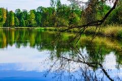 Bloße Niederlassung des Baums reflektiert im See Stockfoto