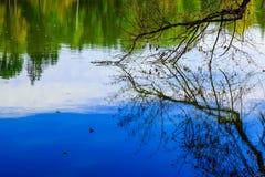 Bloße Niederlassung des Baums reflektiert im Wasser Stockbild