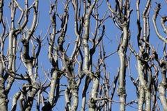 Bloße Niederlassungen über blauem Himmel Lizenzfreies Stockfoto