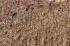 Bloße Niederlassungen der Bäume im Winter Lizenzfreie Stockbilder