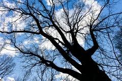 Bloße Niederlassungen des Baums auf Himmelhintergrund in der Hintergrundbeleuchtung Lizenzfreie Stockbilder