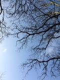 Bloße Niederlassungen des blauen Himmels Stockbilder