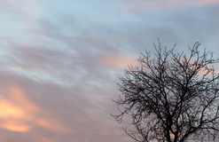 Bloße Niederlassungen eines Baums bei Sonnenuntergang Lizenzfreies Stockfoto