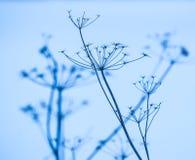 Bloße Niederlassungen eines Busches im Schnee Lizenzfreie Stockbilder