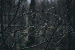 Bloße Niederlassungen im Winter Stockbild