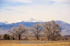 Bloße Pappel-Bäume auf dem Kolorado-Grasland Lizenzfreies Stockbild