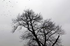 Bloße Platane und Vögel im Winter Lizenzfreies Stockfoto
