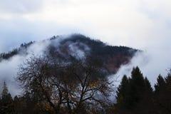 Bloße Spätherbstbäume umrissen gegen Berge mit dem Nebel, der in Kreise wirbelt stockbilder