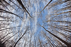 Bloße Treetops in der Winterzeit Stockfotografie