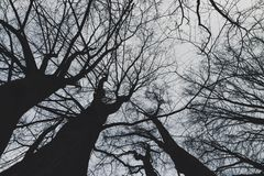 Bloße Treetops Oben schauen stockbilder