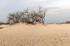 Bloße Treetops und Büsche in den Dünen von Treibsanden Lizenzfreie Stockbilder