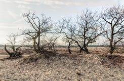 Bloße Treetops und Büsche in den Dünen von Treibsanden Stockfotos