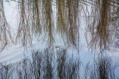 Bloße Weidenniederlassungen über dem ruhigen Wasser Stockbild