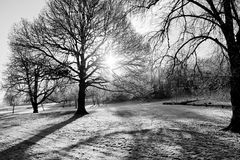Bloße Winter-Bäume Stockfotografie