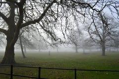 Bloße Winterbäume auf nebelhaftem Morgen Stockfotografie