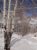 Bloße Winterespen gegen einen blauen Himmel Lizenzfreie Stockfotos