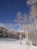 Bloße Winterespen gegen einen blauen Himmel Lizenzfreies Stockfoto