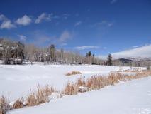 Bloße Winterespen gegen einen blauen Himmel Lizenzfreies Stockbild