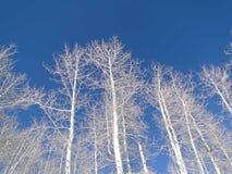 Bloße Winterespen gegen tiefen blauen Himmel Stockfotografie