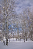 Bloße Winterespen mit blauem Winterhimmel Lizenzfreies Stockfoto