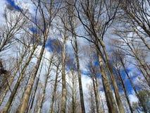 Bloße Winterniederlassungsreichweite in Richtung zum Himmel Stockfoto