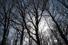 Bloße Zweige lizenzfreies stockfoto