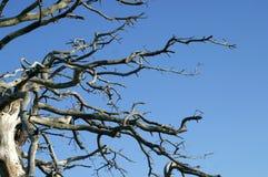 Bloße Zweige Stockbild