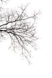 Bloße Zweige Stockfotografie
