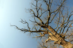 Bloße Zweige lizenzfreie stockfotografie