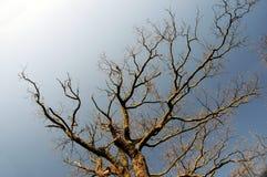 Bloße Zweige lizenzfreie stockfotos