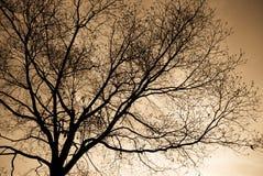 Bloße Zweige lizenzfreies stockbild