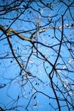 Bloße Zweige an einem hellen Fall-Tag Lizenzfreie Stockfotos