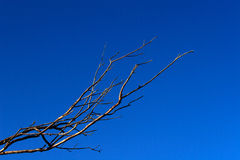 Bloße Zweige gegen Blau-Himmel Stockbilder