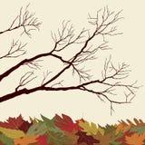 Bloße Zweige mit gefallenen Blättern stock abbildung