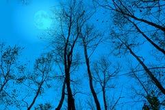Bloße Zweige nachts Lizenzfreies Stockbild