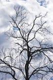 Bloße Zweige, stürmischer Himmel Lizenzfreie Stockfotos