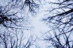 Bloße Zweige und Himmel Stockbild