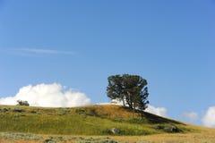 Bloßer Abhang und Bäume Lizenzfreie Stockfotos