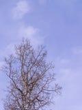 Bloßer Aspen Silhouette mit Kopienraum Lizenzfreies Stockbild