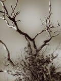 Bloßer Baum Stockfoto
