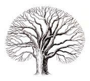 Bloßer Baum vektor abbildung