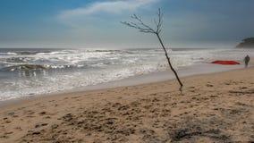 Bloßer Baum auf einem Strand mit rauen Wellen Stockfotos