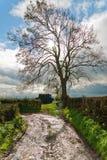 Bloßer Baum auf einem Weg Stockfoto