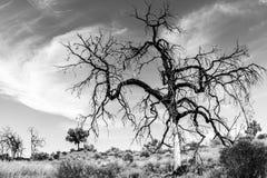 Bloßer Baum in Australien, Nordterritorium, fisheye Linse lizenzfreie stockfotos