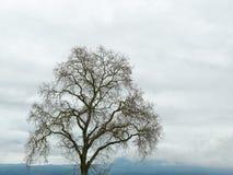Bloßer Baum, bewölkter Himmel Lizenzfreie Stockbilder