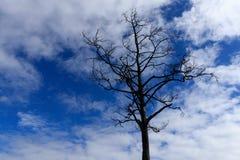Bloßer Baum, blattloser Baum, ist es am Ende der Wintersaison lizenzfreies stockfoto