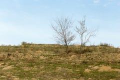 Bloßer Baum in der Natur Stockbilder